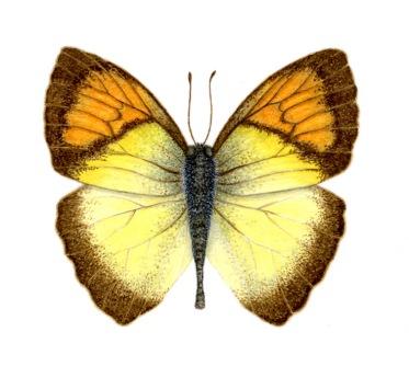 Butterfly lo