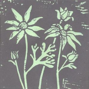 Flannel flowers 2