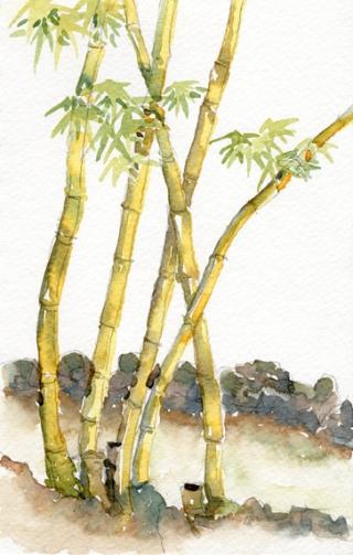 Golden Bamboo lo.jpg