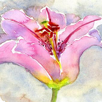 Pink Lily crop lo.jpg