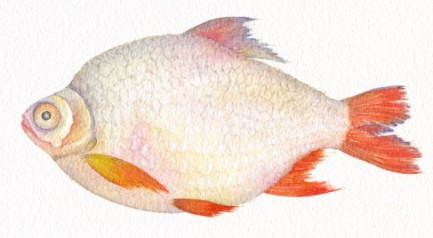 Viet fish lo.jpg