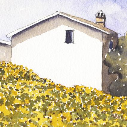 Tuscan Sunflowers lo crop