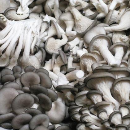 San Fran Mushrooms lo crop